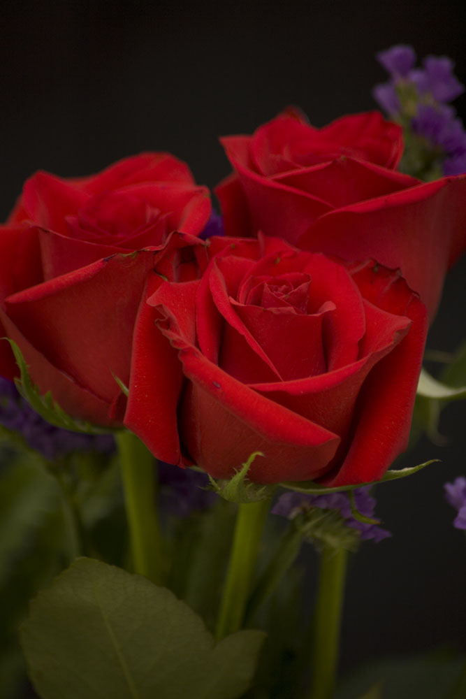 Photograph of Red Roses