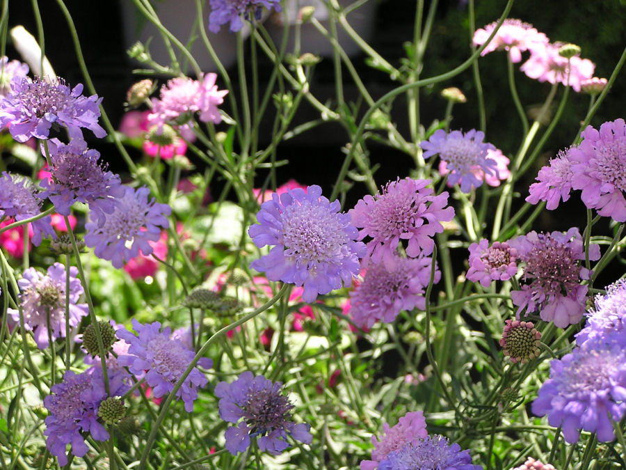 Photo of a Purple Flowers, www.akidsphoto.com