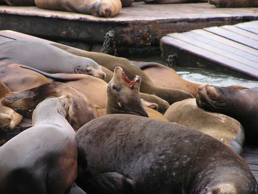 Photo of Sea lions
