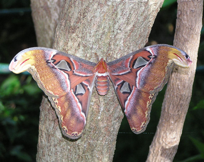 Photo of a Moth