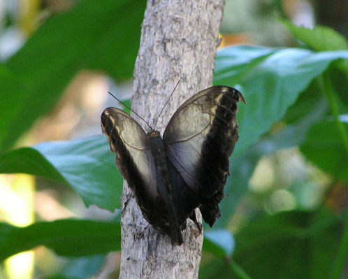 Photo of a Butterfly