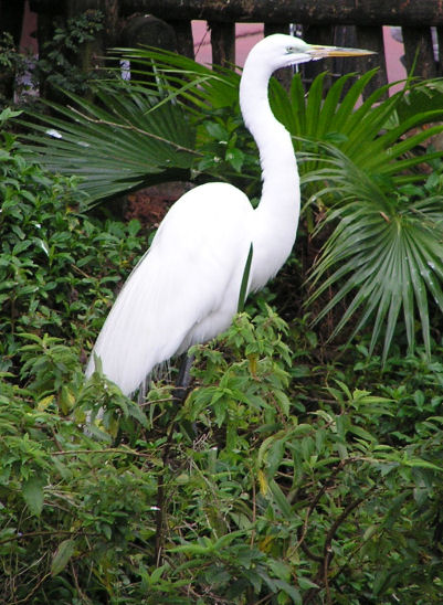 Photo of a Egret