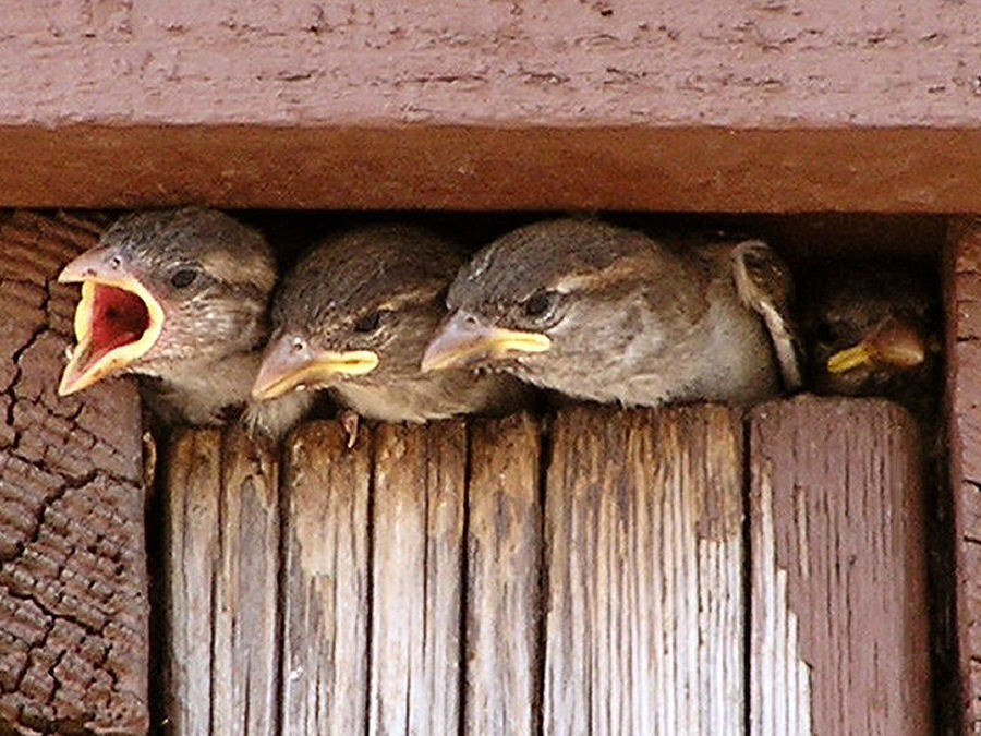 Photo of a Baby Birds