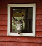 Photo of Donkey