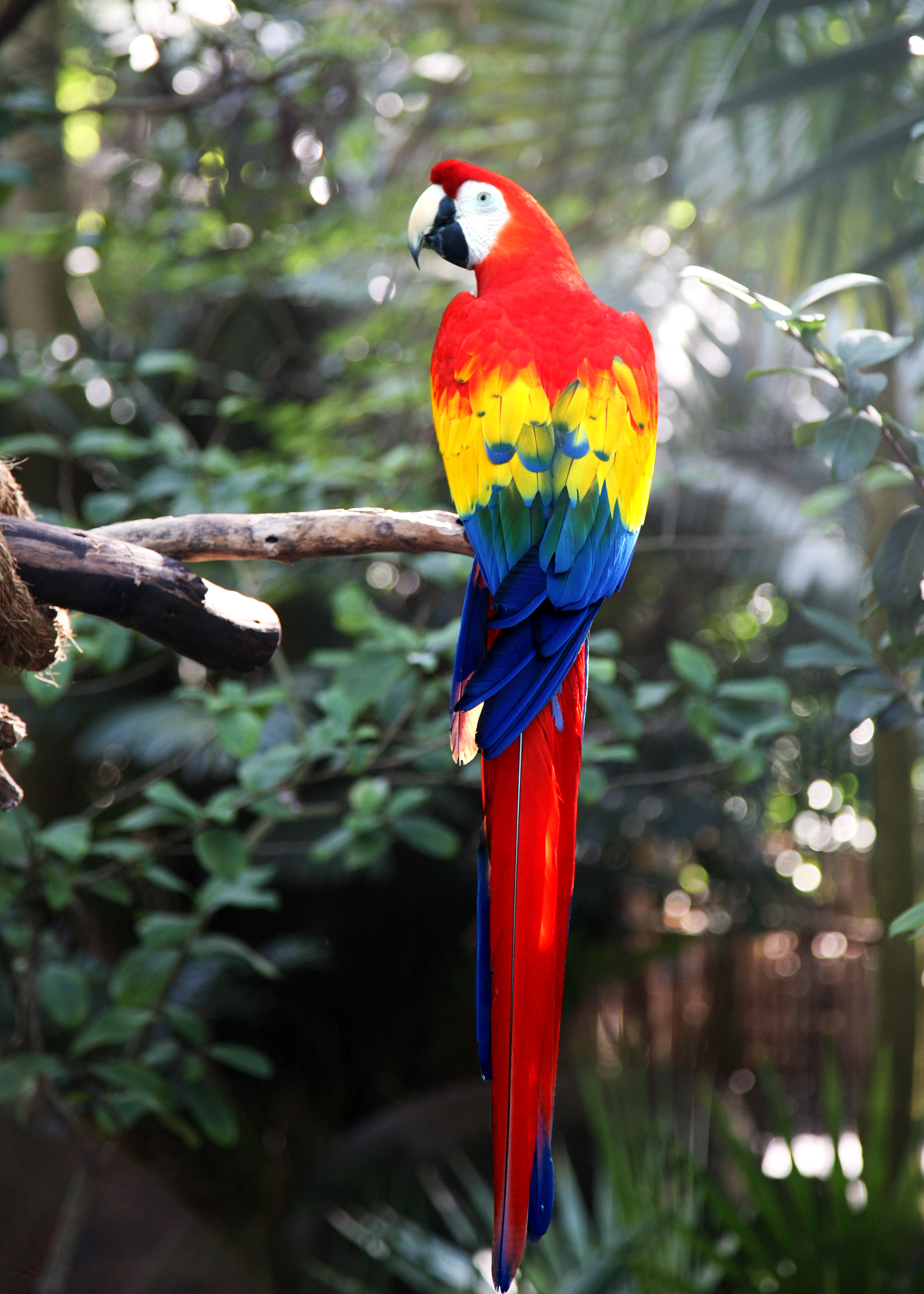 Photo of scarlet macaw parrot