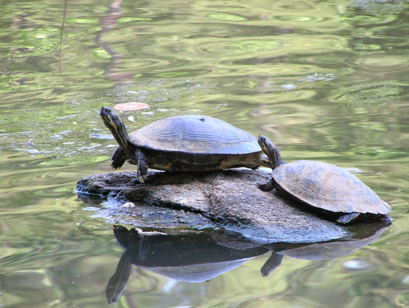 Photo of Turtles