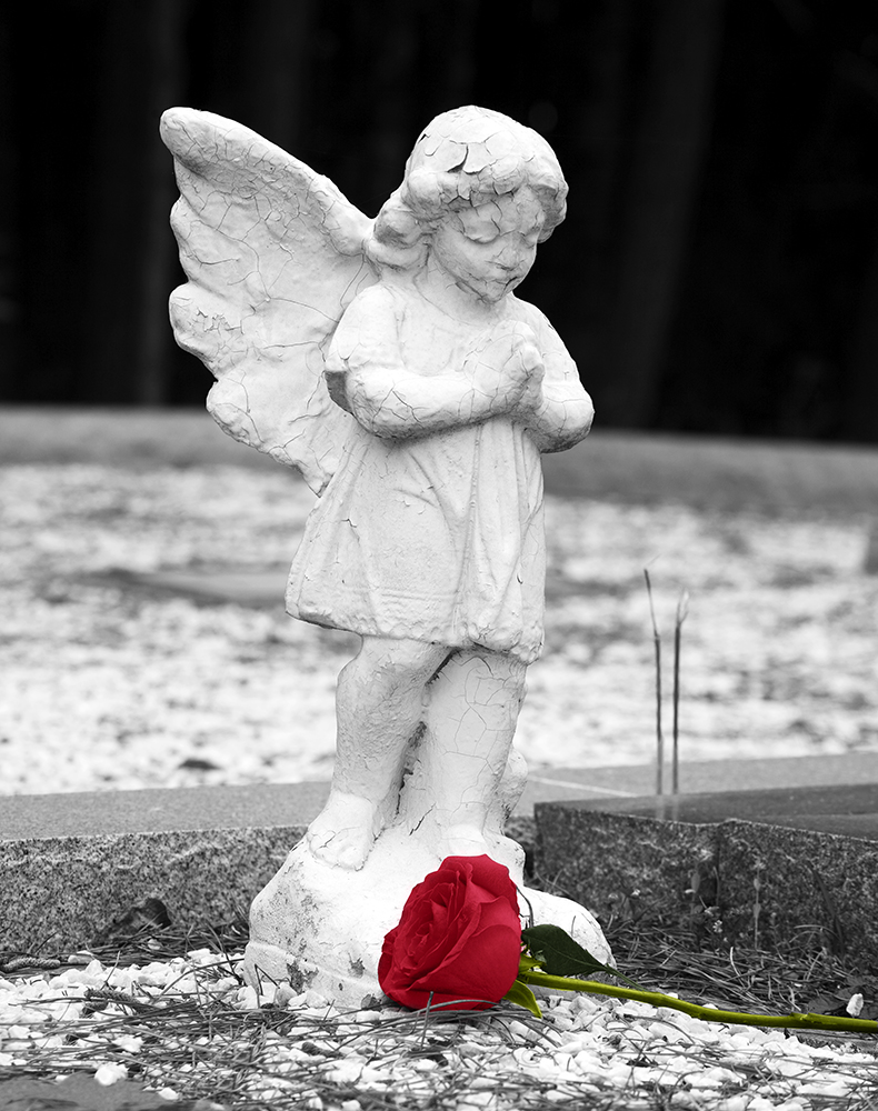 Photo of Angel with Rose