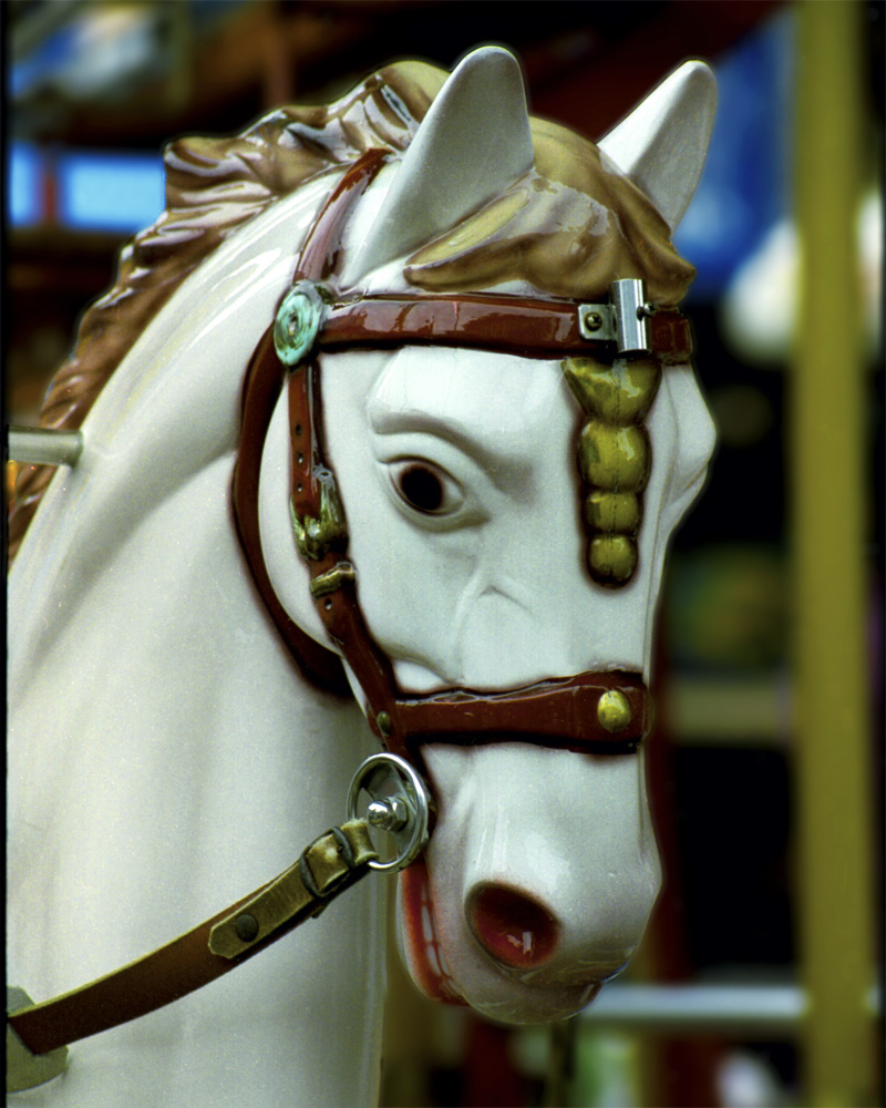 Picture of a Carousel Horse
