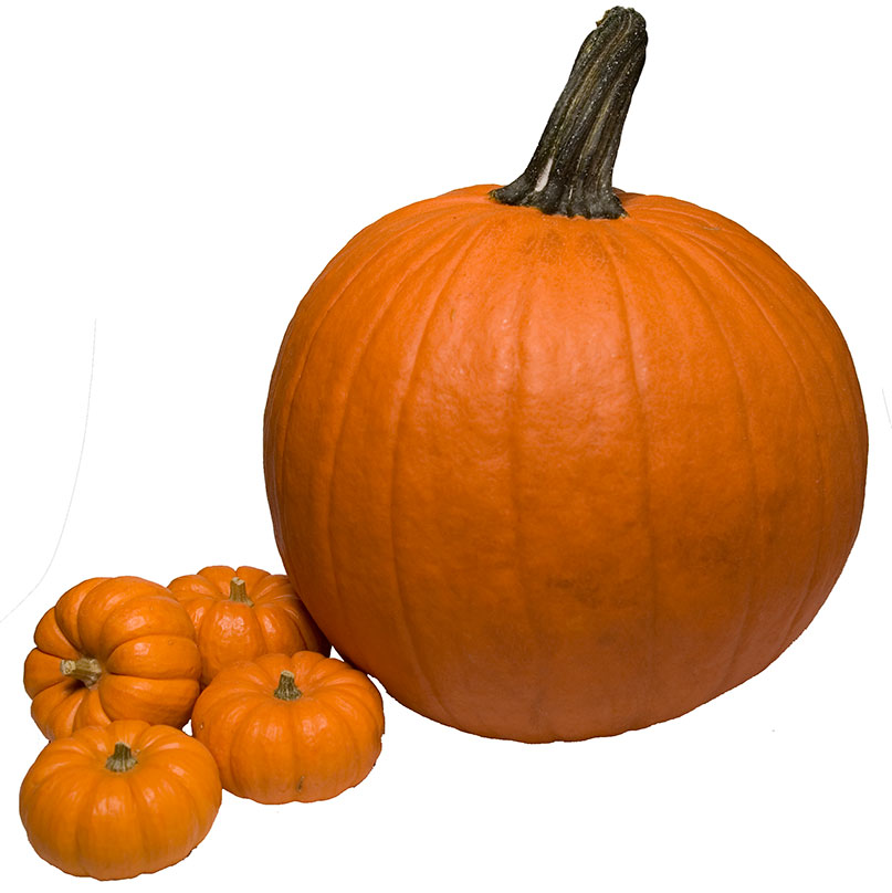 photo of a pumpkin