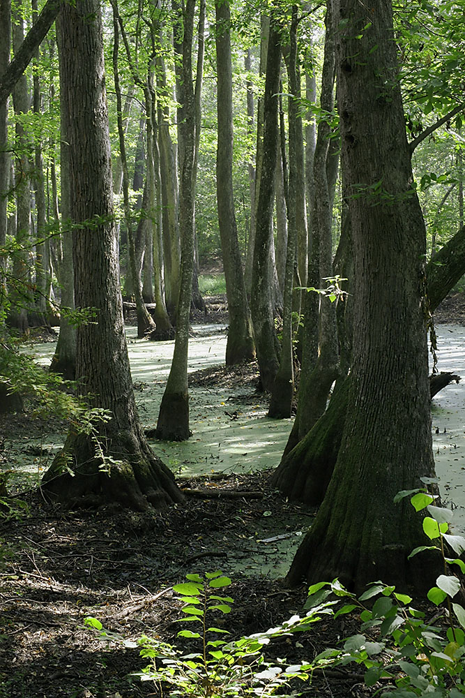 Photo of Natchez Trace Parkway Swamps