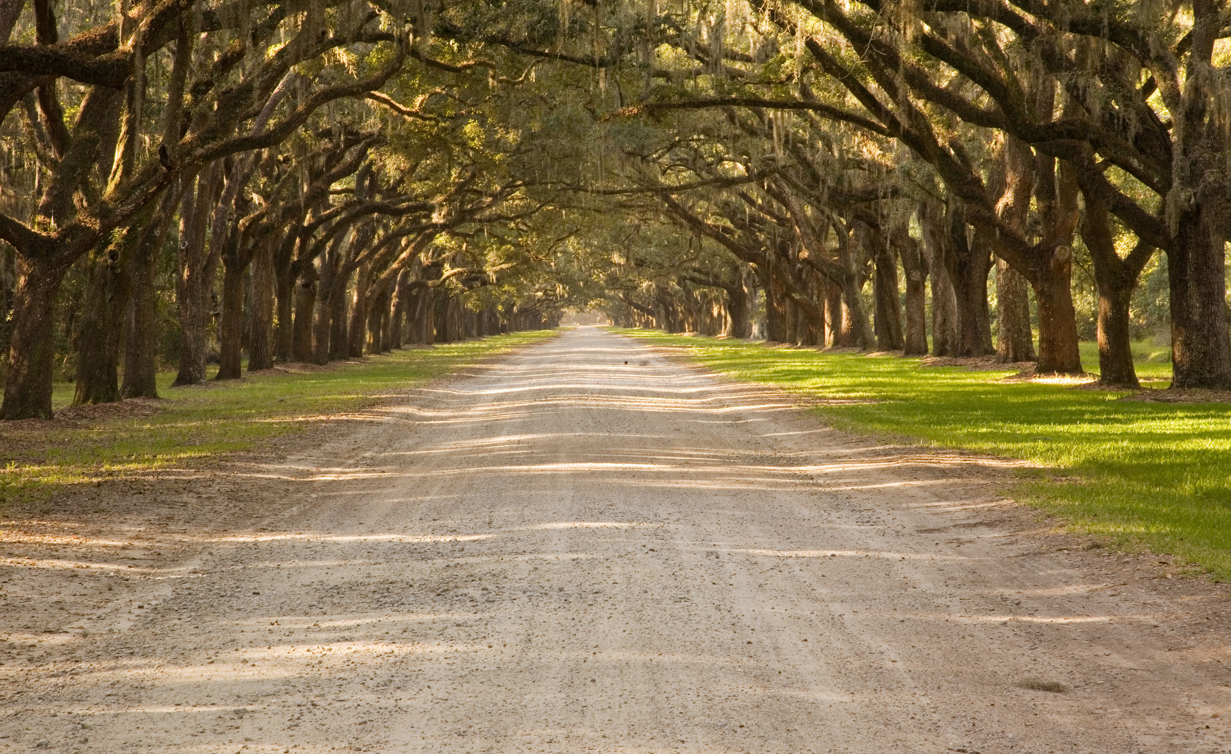Photo of a Wormsloe Park