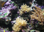 Photo of Ocean Coral