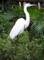 Photo of an Egret
