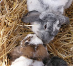 Photo of Rabbits