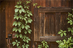 Photo of Wood Shed and Vine
